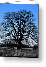 Stark Tree Greeting Card