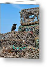 Starling On Lobster Pots Greeting Card