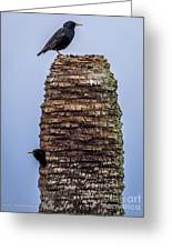Starlings 2 Greeting Card