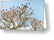Starlings For Leaves - Sturnus Vulgaris Greeting Card