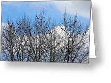 Starlings In The Cottonwoods Greeting Card