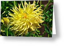 Starlite Dahlia Greeting Card