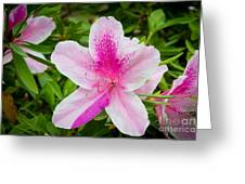 Starry Nature Greeting Card