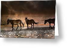 Starry Night Beach Horses Greeting Card