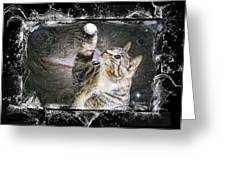 Starry Night Kitty Style Splash Greeting Card