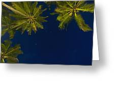 Stars At Night With Palm Tree Thalpe Greeting Card