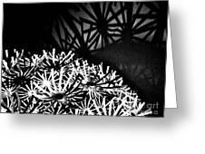 Stars Shadow Greeting Card