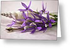 Starshine Laurentia Flowers And White Shell Greeting Card