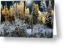 Starshine On A Snowy Wood Greeting Card