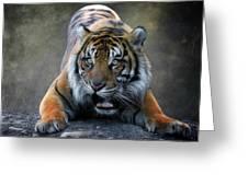 Startled Tiger Greeting Card