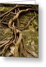 State Park Roots Greeting Card