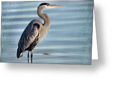 Stately-great Blue Heron Greeting Card