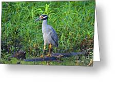 Stately Heron Greeting Card