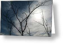 Steal Trees Greeting Card
