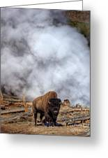 Steamed Bison Greeting Card