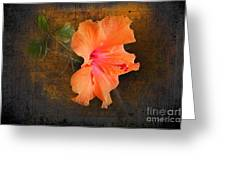 Steely Hibiscus Greeting Card by The Stone Age