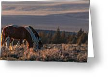 Steens Sundown Greeting Card