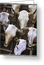 Steer Skulls  - New Mexico Greeting Card