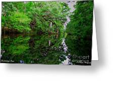 Steinhatchee River Greeting Card