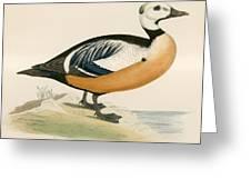 Stellers Western Duck Greeting Card