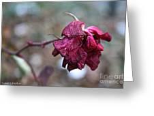 Stem Dried Petals Greeting Card