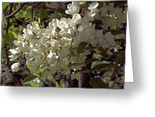 Stem Of Locust Flowers Greeting Card