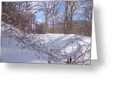 Stems In Snow Greeting Card