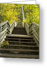 Step Trail In Woods 10 Greeting Card