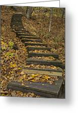 Step Trail In Woods 11 Greeting Card