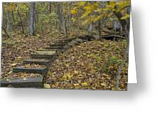 Step Trail In Woods 12 Greeting Card