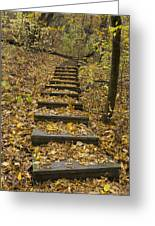 Step Trail In Woods 14 Greeting Card