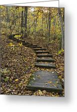 Step Trail In Woods 15 Greeting Card