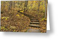 Step Trail In Woods 16 Greeting Card