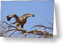 Steppe Eagle Aquila Nipalensis 1 Greeting Card