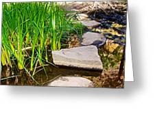 Stepping Stones Across Creek On Lower Palm Canyon Trail In Indian Canyons Near Palm Springs-ca Greeting Card