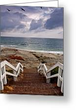 Steps And Pelicans Greeting Card