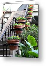 Steps Oh Plants Greeting Card
