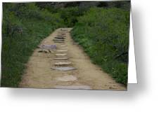 Steps Through Nature Greeting Card