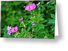 Sticky Geranium Greeting Card