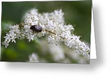 Stiff Dogwood Wildflowers And Beetle Greeting Card