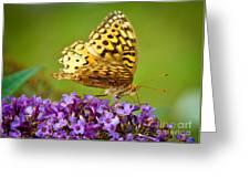Still Beautiful Greeting Card