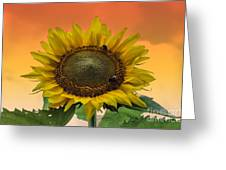 Still Busy At Sunset Greeting Card