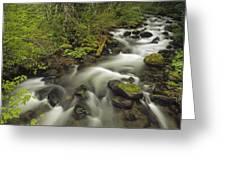 Still Creek Mt Hoodoregon Greeting Card