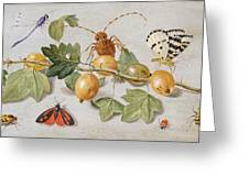 Still Life Of Branch Of Gooseberries Greeting Card by Jan Van Kessel