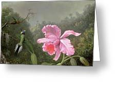 Still Life With An Orchid And A Pair Of Hummingbirds Greeting Card by Martin Johnson Heade