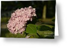 Still Pink Greeting Card