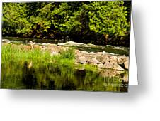 Still Pool And Fast River Greeting Card