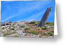 Still Standing. Near Mount St. Helens 2012 Greeting Card