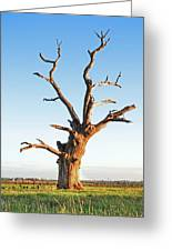 Still Standing Proud Greeting Card