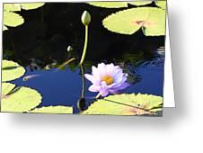 Stillness In Motion Greeting Card